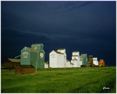 Champion Grain Elevators, Alberta
